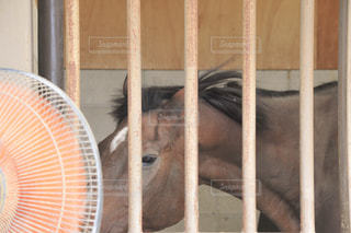 暑い,扇風機,馬,風,熱中症対策