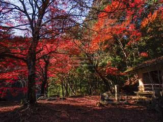 吉野山、奥千本の写真・画像素材[1415159]