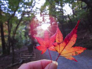 秋の春日山原始林の写真・画像素材[1628545]