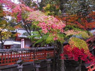 秋の奈良の写真・画像素材[1628569]
