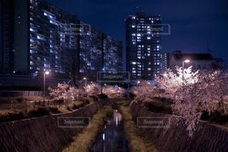 夜桜の写真・画像素材[3085827]