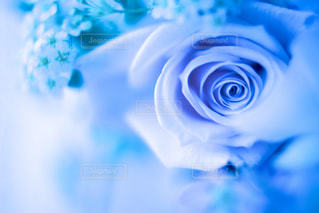 花のクローズアップの写真・画像素材[3085834]