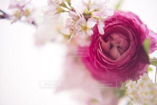 花のクローズアップの写真・画像素材[3085836]