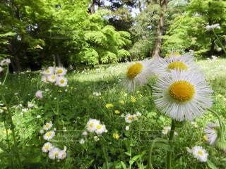 花園のクローズアップの写真・画像素材[3149353]