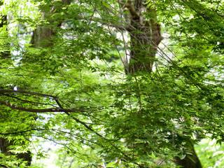 森の中の木の写真・画像素材[3149352]