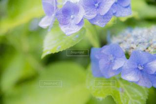 花のクローズアップの写真・画像素材[3341187]