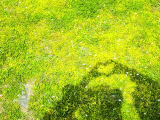 新緑に映すハートの影絵の写真・画像素材[4304599]