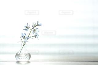 一輪挿しに飾られたデルフィニウムの写真・画像素材[4316623]