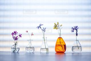 一輪挿しに挿した野の花たちの写真・画像素材[4332824]