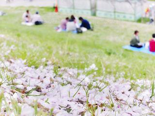 桜吹雪舞い散る野原でピクニックを楽しむ人たちの写真・画像素材[4355098]