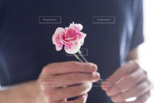 カーネーションを持つ手の写真・画像素材[4391602]