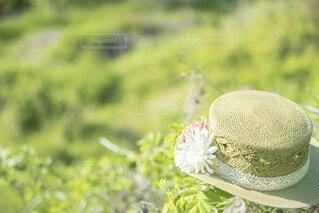 野原の麦わら帽子の写真・画像素材[4412996]