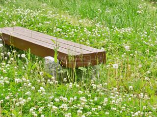 野原のベンチの写真・画像素材[4413027]