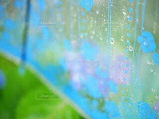 ビニール傘の水滴と紫陽花の写真・画像素材[4536375]