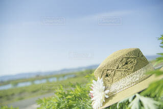 空と麦わら帽子の写真・画像素材[4750965]
