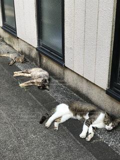 歩道の上に横たわる猫の写真・画像素材[1279185]