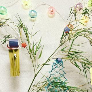 色とりどりの花のグループの写真・画像素材[1288674]