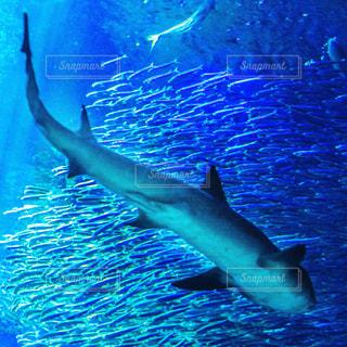 水面下を泳ぐ魚たちの写真・画像素材[1264596]