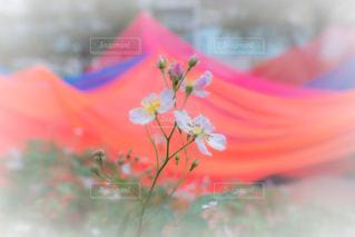 渓谷に咲く花の写真・画像素材[2637628]