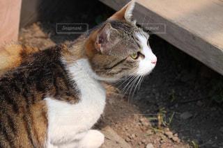木製テーブルの上に座っている猫の写真・画像素材[1264703]