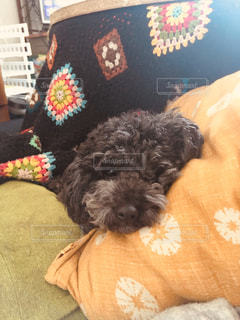 コタツムリ犬の写真・画像素材[1749506]