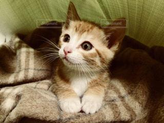 おすまし猫ちゃん♡の写真・画像素材[1267172]