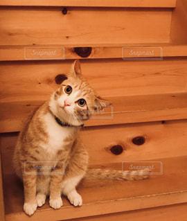 階段に座っている猫の写真・画像素材[1270821]