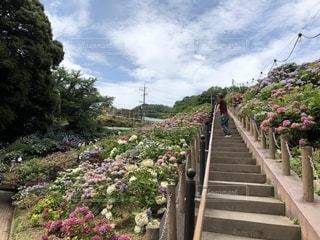 男性,風景,花,イケメン,カラフル,紫陽花,色鮮やか,インスタ映え