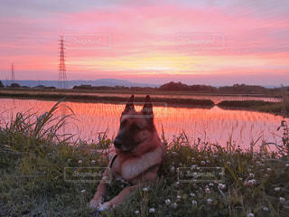 犬,空,雲,夕暮れ