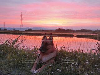 犬,自然,風景,空,雲,夕暮れ