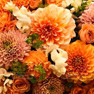 花の写真・画像素材[1581358]