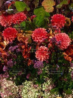 秋色の写真・画像素材[1611896]