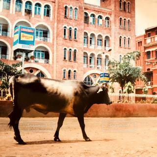 観光,旅行,インド