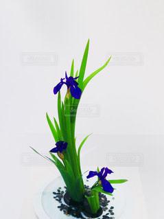 花の写真・画像素材[1988675]
