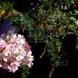 スプリングフラワーの写真・画像素材[2141180]