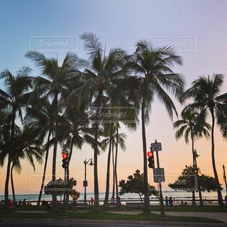 空,夕日,旅行,ヤシの木,ハワイ,ワイキキ,サンセット,バケーション,フォトジェニック,カラカウア