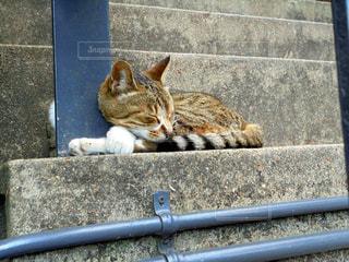 階段で寝てる猫の写真・画像素材[1270348]