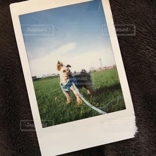 愛犬のポートレートbyチェキの写真・画像素材[1270546]