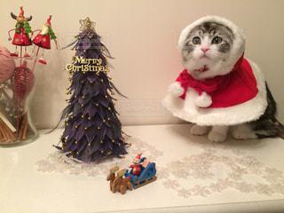 クリスマスの写真・画像素材[1270989]