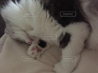 ベッドの上で眠っている猫の写真・画像素材[1805229]