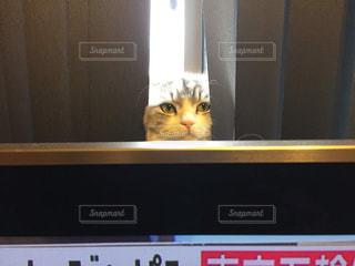 テレビの前に座っている猫の写真・画像素材[2168179]
