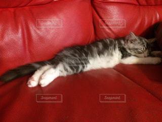 赤いソファーで眠っている猫の写真・画像素材[2168198]