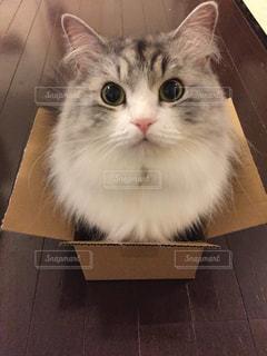 大好きな箱に入ってご満悦❣️の写真・画像素材[2291825]