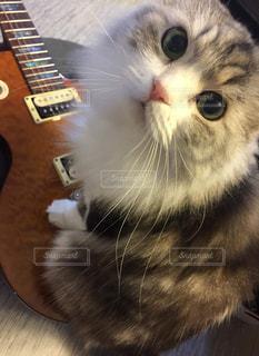 ギター🎸と愛猫❤️の写真・画像素材[2291833]