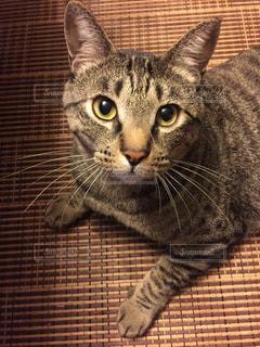 うちのカワイイ愛猫❣️の写真・画像素材[2291834]
