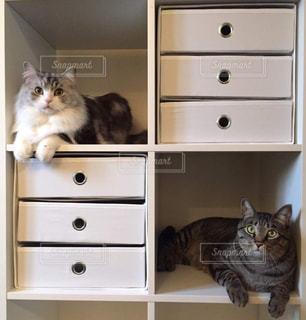 うちのカワイイ愛猫❣️の写真・画像素材[2291842]