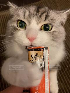 猫のクローズアップの写真・画像素材[4237736]