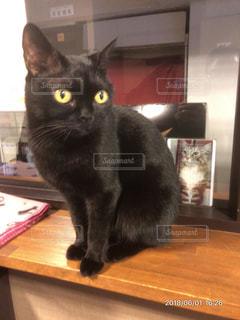 木製テーブルの上に座っている黒い猫の写真・画像素材[1276153]