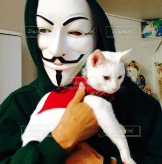 着ぐるみを着た猫の写真・画像素材[1276347]