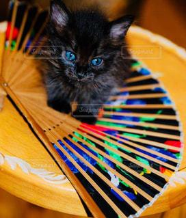 黄色い傘を持った猫の写真・画像素材[1277266]